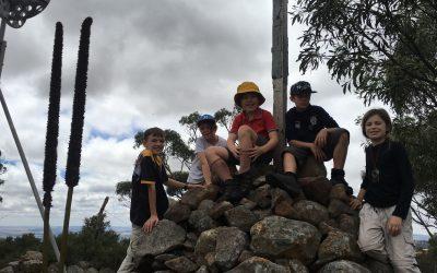 Scouting@Home – Week 15